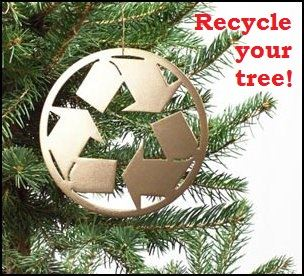 Christmas tree branches with recycling symbol ornament + text, &#34Recycle your tree!&#34