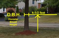 Diameter Breast Height Tree Measurement