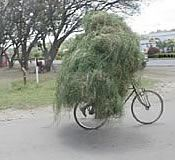 Man Riding a Bicycle While Carrying Grass