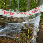 Photo of the woods during the Haunted Walk, with cobwebs around the trees and